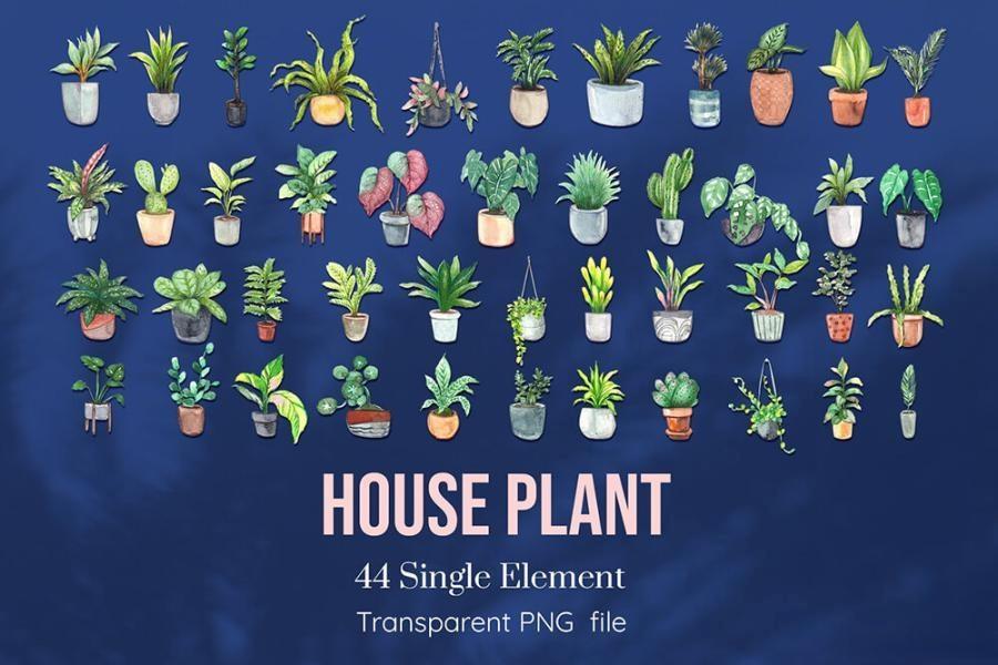 室内植物绿植花卉装饰水彩插画png插画素材